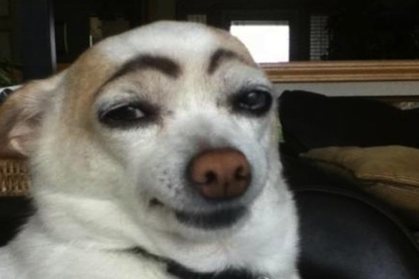 dog meme brow